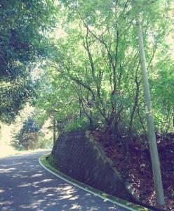 畔田キャンプ場へいく道